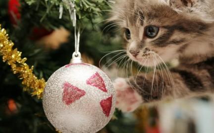 Snobka świątecznie: zwierzaki pod choinkę Tylko pluszowe
