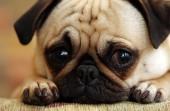 Wakacje - czas porzuconych psów. Także rasowych