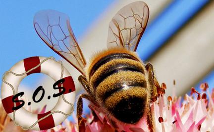 Ratowniczka snobki: gdy owady nie próżnują