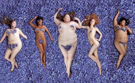 American Beauty w płatkach bzu