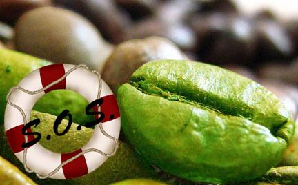 Ratowniczka Snobki: zielona kawa
