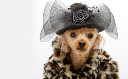 Pet a porter czyli haute couture dla pupili