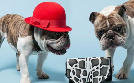 Ciekawe sesje fotograficzne: psy w kocich oprawkach