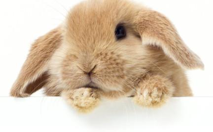 Kosmetyki testowane na zwierzętach