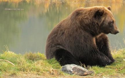 Tajemnice kosmetyków: maść kontra żel niedźwiedzi