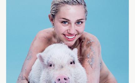 Miley Cyrus ze świnką na okładce Paper Magazine