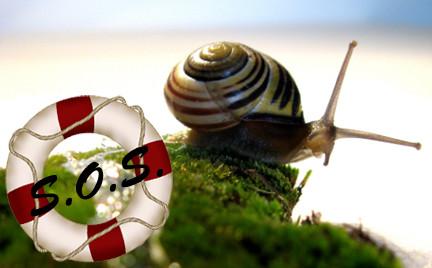 Ratowniczka Snobki: śluz ślimaka