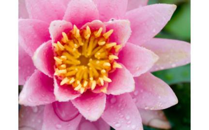 Tajemnice kosmetyków: perfumy kwiatowe