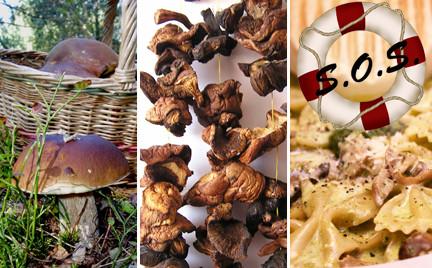 Ratowniczka Snobki: suplementy z grzybów