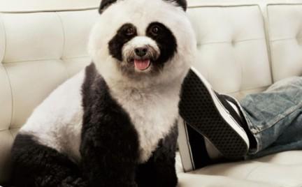 Pies-panda must-have sezonu w Chinach