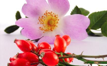 Tajemnice kosmetyków: olejek różany